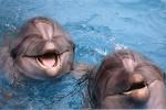 Московский передвижной дельфинарий и парк аттракционов