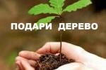Подари дерево
